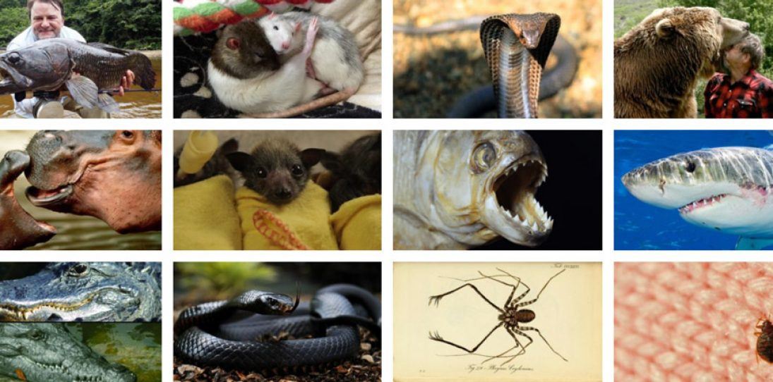 Scariest animals in the world