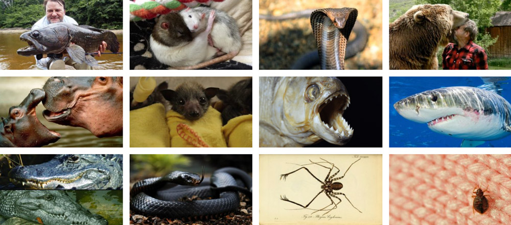 Scariest animals in the world 17 Scariest Animals in The World (Kill or Be Food)