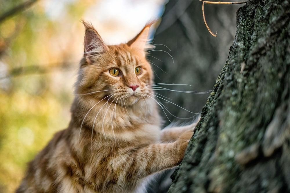 Most-Beautiful-Cat-Breeds