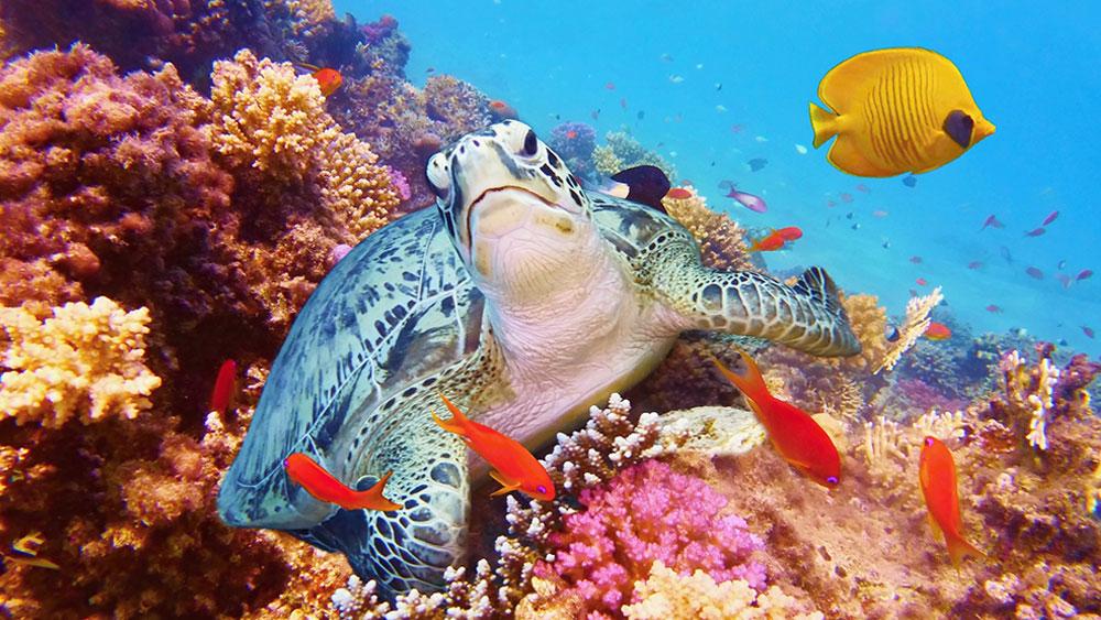 Great Barrier Reef - Beautiful Australia